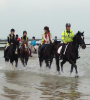 RIDING STABLES PRICES FOR 2015
